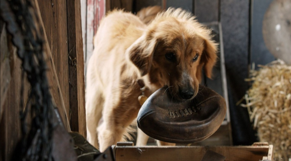 Disturbing Video of Alleged Animal Cruelty Poses Controversy for Family Film 'A Dog's Purpose'