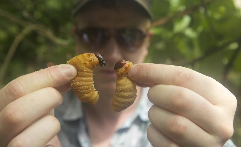 Tribeca Film Festival Review – 'Bugs'
